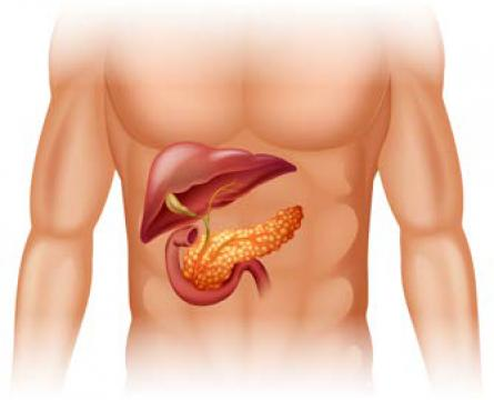 Изследване на жлъчката и панкреаса